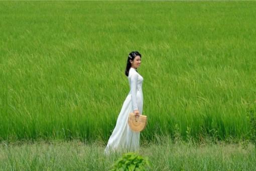 Thương mùa lúa trổ đòng đòng…