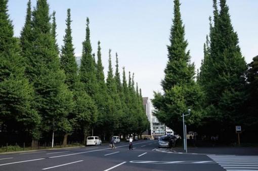 Thông là chìa khóa giúp giảm ô nhiễm tiếng ồn đô thị