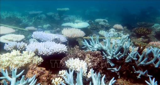 Rạn san hô lớn nhất thế giới trải qua đợt tẩy trắng nghiêm trọng nhất trong lịch sử