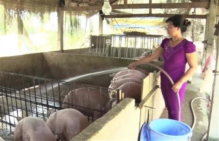 Bộ trưởng NN&PTNT: Đẩy mạnh tái đàn lợn an toàn bù thiếu nguồn cung