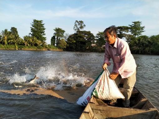 Ngư dân chuyển đổi hình thức nuôi cá tra quảng canh chờ giá