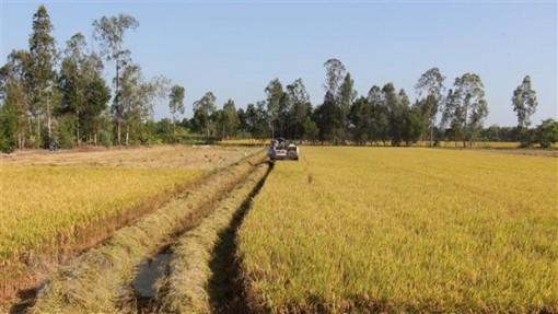 Đẩy mạnh sản xuất đảm bảo nhu cầu gạo trong nước và xuất khẩu