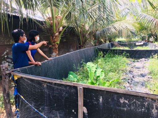 Hiệu quả mô hình hợp tác nuôi lươn