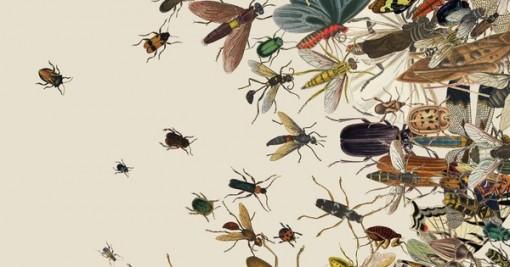 25% số côn trùng biến mất sau 30 năm