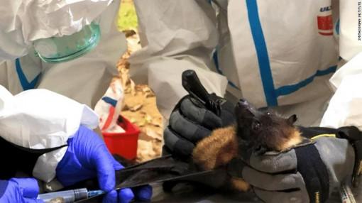 Nhóm thợ săn virus liều mình trong hang dơi để dự báo đại dịch