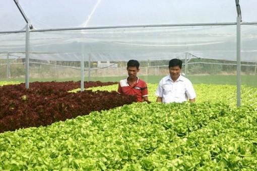 Châu Thành đẩy mạnh chuyển đổi cây trồng