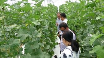 Đưa cây trồng giá trị về vùng đất Tri Tôn
