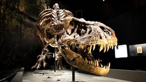 Phát hiện hóa thạch 'quái vật' săn mồi 70 triệu năm tuổi ở Argentina