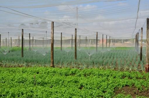 Nông nghiệp tiếp tục là thế mạnh của Việt Nam