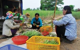 Châu Phú phát triển nông nghiệp ứng dụng công nghệ cao