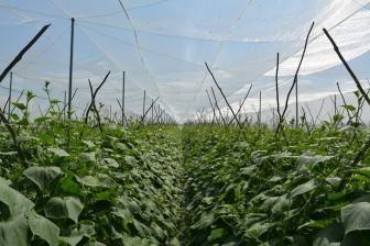 Hòa Bình Thạnh: Khuyến khích nông dân chuyển đổi cơ cấu cây trồng