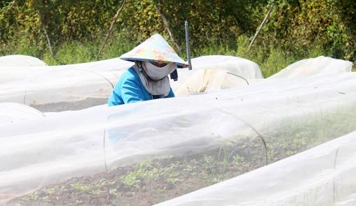 Khi nông dân chọn hướng sản xuất sạch