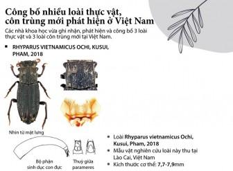 Công bố nhiều loài côn trùng và thực vật mới ở Việt Nam