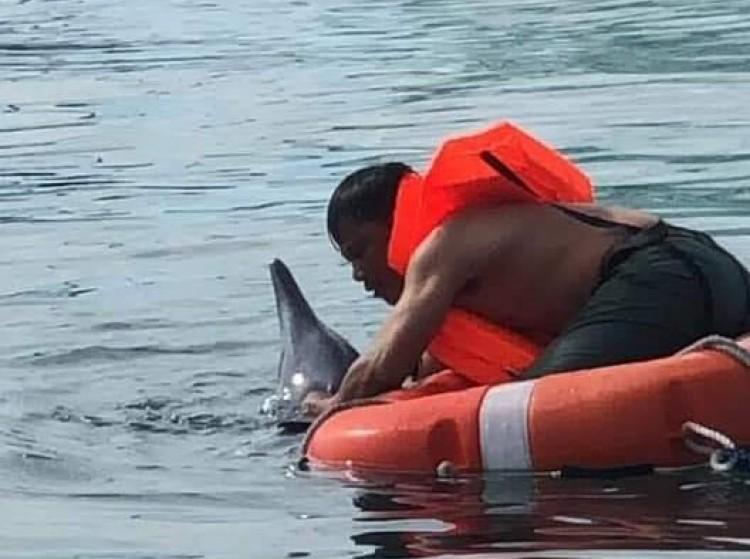 Cứu hộ thành công một chú cá heo dạt vào bờ biển Đà Nẵng