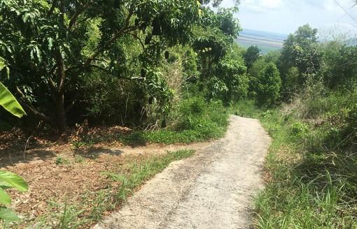 Phát triển vườn cây ăn trái ở núi Dài