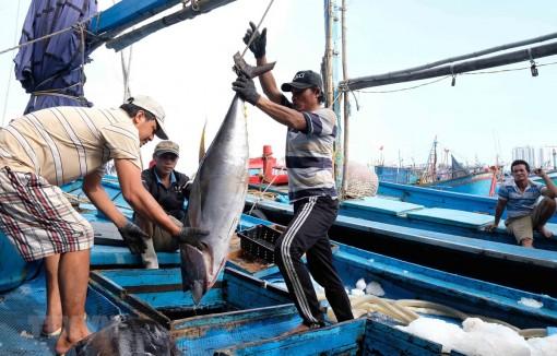Việt Nam bảo vệ và phát triển nguồn lợi hải sản vì một đại dương xanh