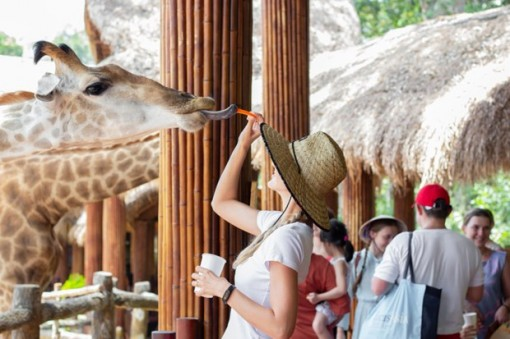Ăn gì, chơi gì, ở đâu khi đến du lịch tại đảo ngọc Phú Quốc?