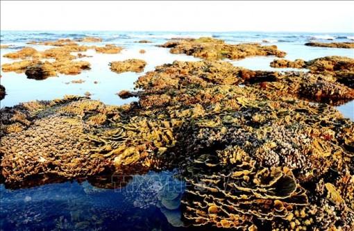 Mê mẩn những rạn san hô rực rỡ sắc màu ở 'thủy cung trên cạn' Gành Yến