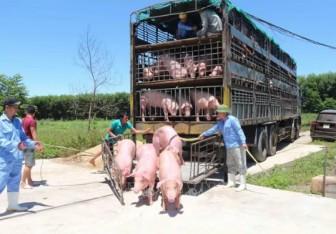 Giá heo hơi hôm nay 19-6: 15 công ty muốn nhập lợn sống từ Thái Lan, giá lợn miền Bắc giảm