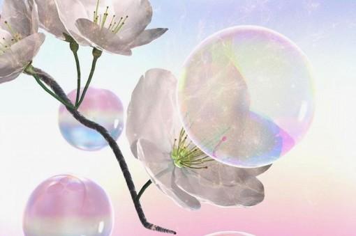 Dùng bong bóng xà phòng thụ phấn cho hoa