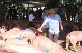 Giá heo hơi hôm nay 24-6: Heo nhập từ Thái Lan chính thức gia nhập thị trường, giá 90.000đ/kg