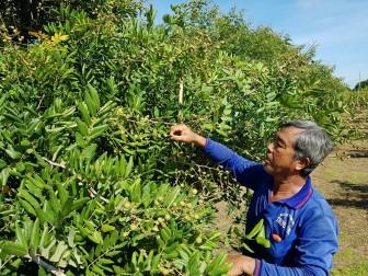 An Giang hướng đến phát triển nông nghiệp bền vững