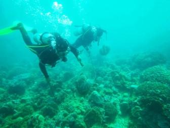 Ngắm san hô ở Hòn Mun