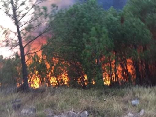 Cả nghìn người dập lửa đám cháy rừng lan qua nhiều xã ở Nghệ An