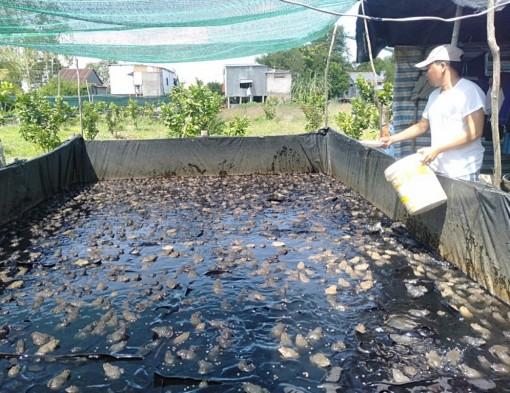 Mô hình nuôi ếch hiệu quả ở xã Khánh Hòa
