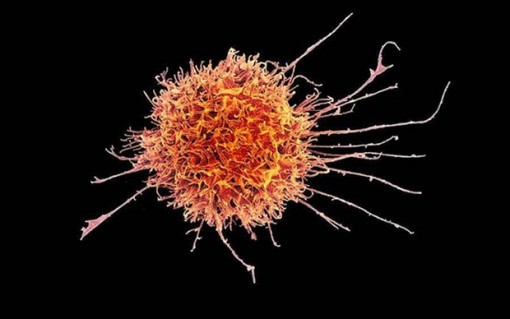 Nhật Bản sử dụng tế bào gốc đa năng trong điều trị ung thư