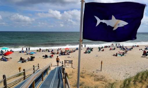 Bãi biển Mỹ phát hiện nhiều cá mập trắng trước kỳ nghỉ quốc khánh