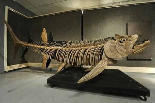 Phát hiện hóa thạch cá khổng lồ 70 triệu năm tuổi ở Argentina