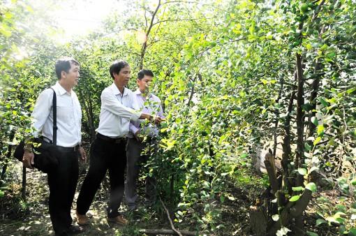 Châu Phú tập trung phát triển kinh tế - xã hội