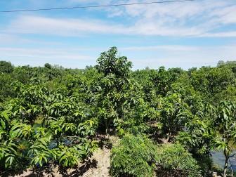 Ngành nông nghiệp An Giang tăng tốc những tháng cuối năm 2020