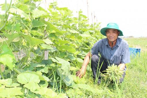 Mô hình nông nghiệp trên đất lúa kém hiệu quả