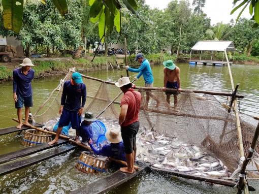 Gỡ khó cho thủy sản