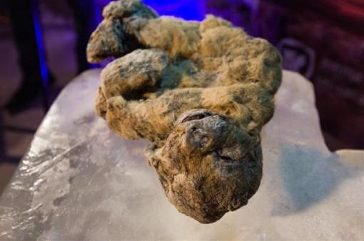 Tìm thấy sư tử song sinh hơn 10.000 tuổi nằm ngủ trong hang