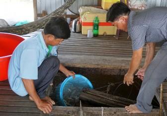 Hiệu quả kinh tế từ nuôi cá heo đuôi đỏ