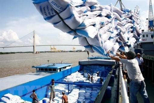 Xuất khẩu gạo Việt Nam sang thị trường châu Phi tiếp tục tăng