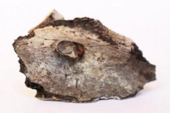 Bộ xương chàng trai quỳ gối tiết lộ lịch sử tục hỏa táng