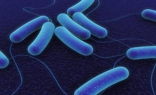 Bộ Y tế cấp phép nhập khẩu thuốc giải độc ngộ độc botulinum