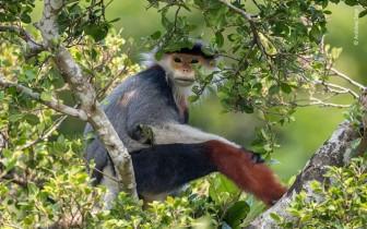 Ấn tượng ảnh thế giới hoang dã năm 2020