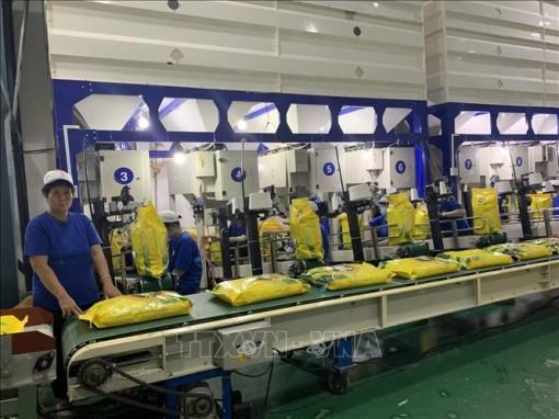 Bảo đảm các quy định về chứng nhận gạo thơm xuất khẩu vào EU