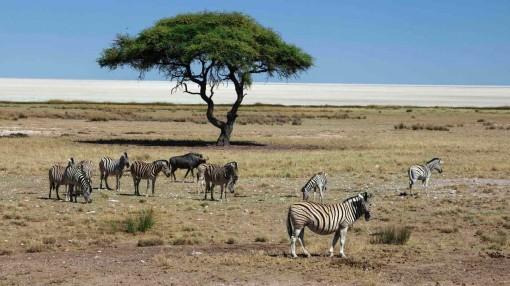 Sự phát triển nóng của loài người trong 50 năm qua đã làm suy giảm 2/3 quần thể động vật trên Trái Đất