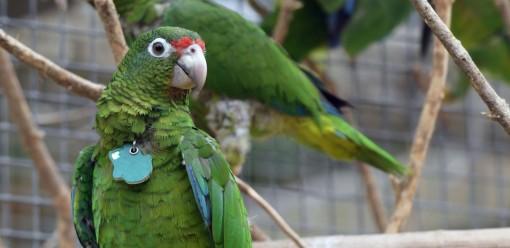 Nỗ lực bảo tồn đã ngăn chặn hàng chục loài khỏi nguy cơ tuyệt chủng