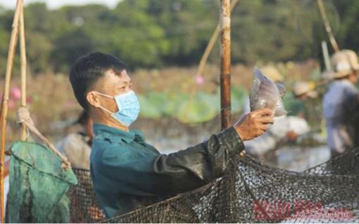 Độc đáo lễ hội phá trằm bắt cá ở Quảng Trị