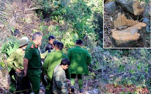 Phạt ba đối tượng phá rừng phòng hộ hơn 340 triệu đồng