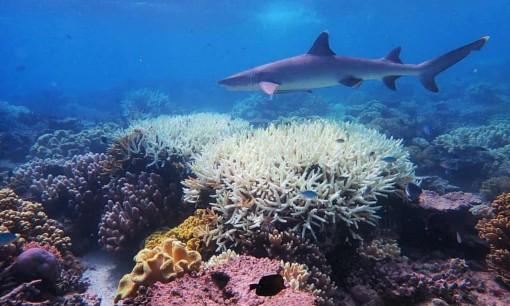 LHQ: Thế giới không đạt được mục tiêu bảo tồn thiên nhiên trong thập kỷ qua