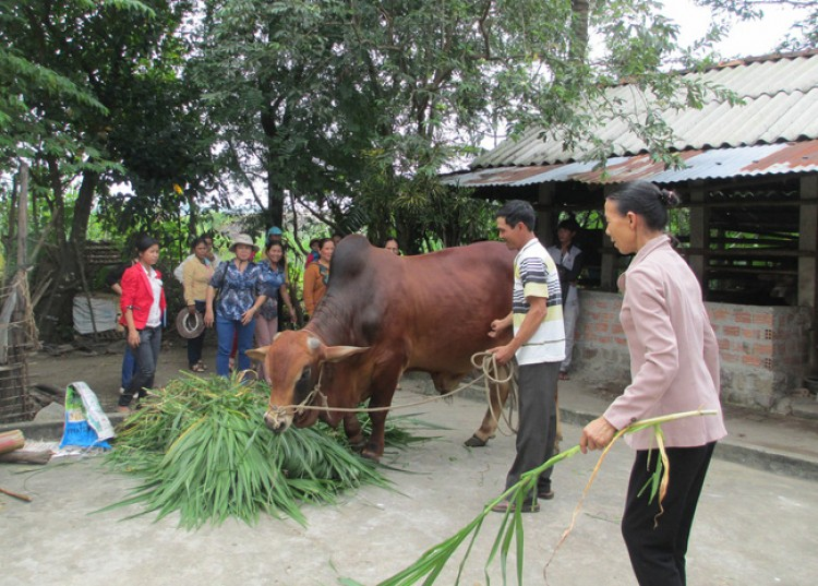 Xây dựng nông thôn mới ở Quảng Ngãi: Đời sống nâng cao, làng xã thêm văn minh...
