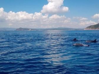 Đàn cá heo hàng trăm con 'vui đùa' trên vùng biển Phú Yên